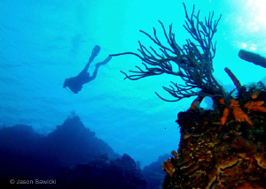 Diver on Palancar wall. by Jason Sawicki